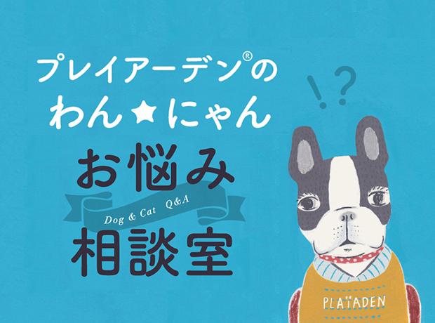 わん☆にゃん お悩み相談室 vol.6【フードの丸飲みや早食いを改善するには?】