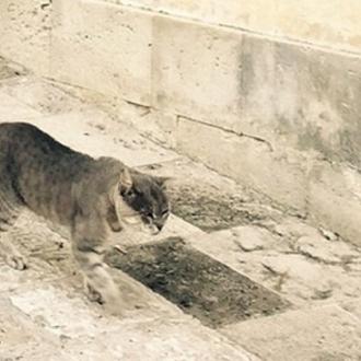憧れの猫との暮らし