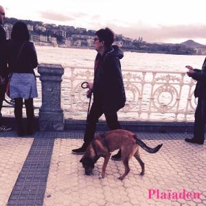 お散歩中の犬と飼い主