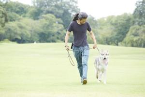 緑地を散歩する男性とサーロスウルフハウンド