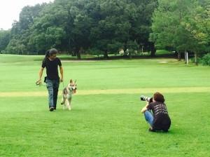 緑地で犬と共に散歩している男性を撮影する人