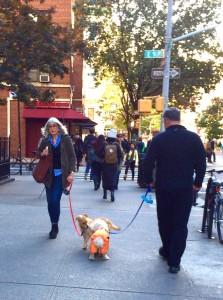すれ違いざまの犬連れの女性と男性