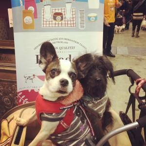 インターペットのプレイアーデンブースに遊びに来たボーダー服の2匹の犬
