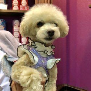 インターペットのプレイアーデンブースに遊びに来た抱えられている犬