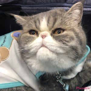 インターペットのプレイアーデンブースに遊びに来た猫