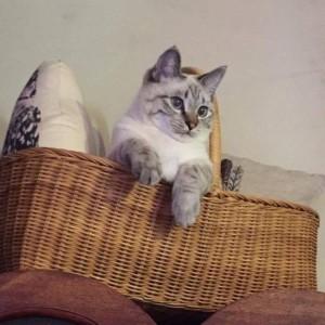 かごバッグに入りながら下を見下ろしている猫