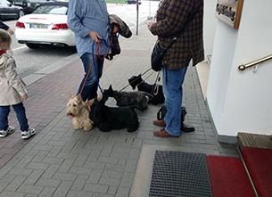 道端で会話をしている人たちとたくさんの犬
