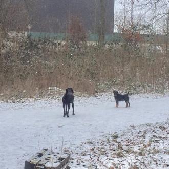 初めて見る雪景色にはしゃぐ愛犬