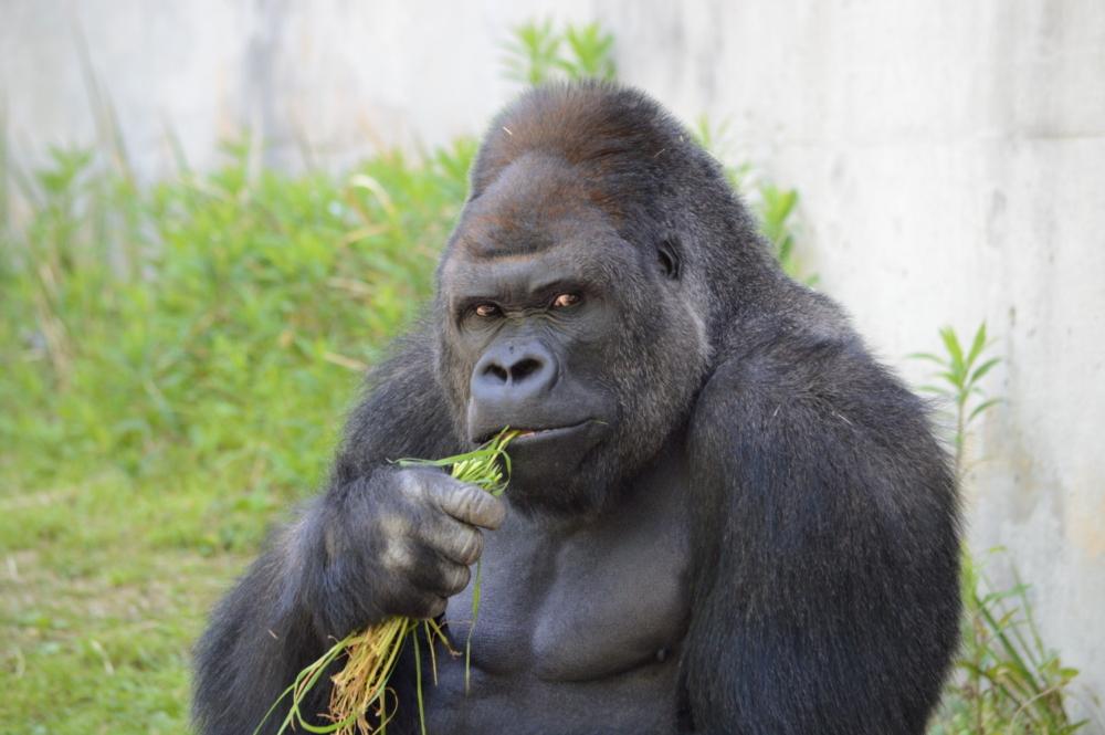 プレイアーデンは、東山動植物園の再生プランを応援しています。