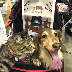 ペット博のプレイアーデンブースに来てくれたダックスフントとキジトラ